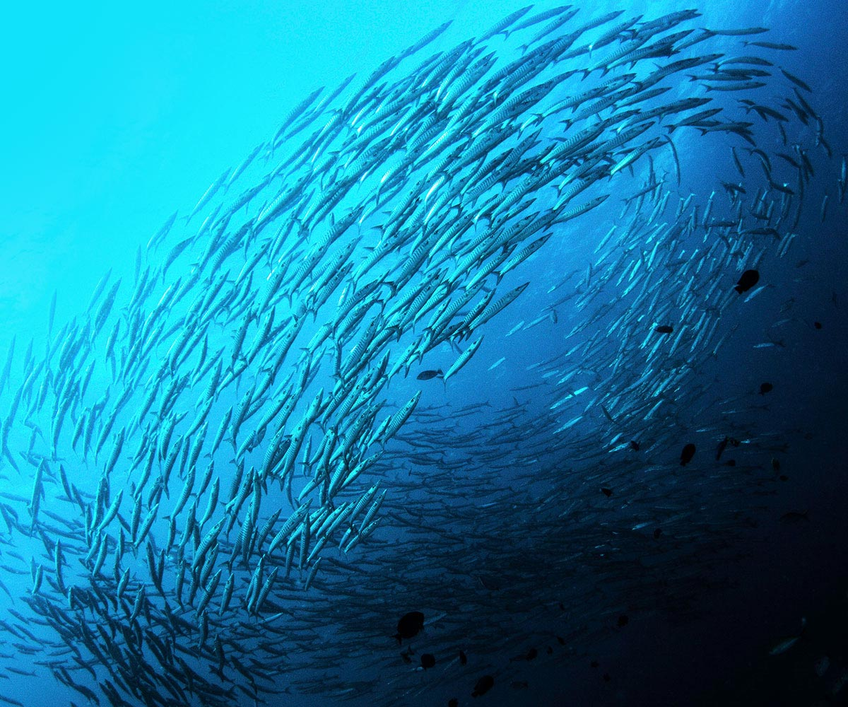 Group of fish circling in the oceon